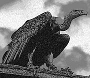 Vulture Print by Dagmar Ceki