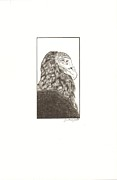 Buzzard Drawings Prints - Vulture Portrait Print by Jennifer Greenfield