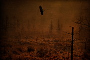 Emily Stauring - Vulture Swamp