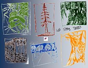 Drawings  - WA State Trees of the NW by Carol Rashawnna Williams