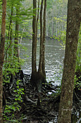 Waccamaw River Prints - Waccamaw View Print by Suzanne Gaff