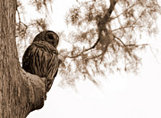 Troy Spencer - Wacissa Owl in Sepia