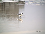 Lounge Photo Originals - Wading by Karen Devonne Douglas
