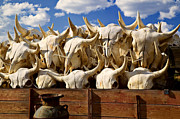 Bison Bison Photos - Wagon full of animal skulls by Garry Gay