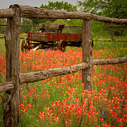 Texas Hill Country Prints - Wagon in Paintbrush - Texas Wildflowers wagon fence landscape flowers Print by Jon Holiday
