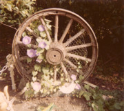 Brodie Photos - Wagon Wheel Memoir by Donna Munro