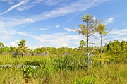 Everglades National Park Posters - Wagon Wheel Road 3 Poster by Rudy Umans
