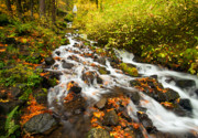 Waterfall Photos - Wahkeena Autumn by Mike  Dawson