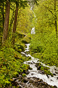 Forest Canyon Prints - Wahkeena Falls,  Columbia River Gorge Print by Steve Bly