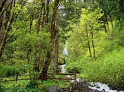 Columbia River Photos - Wahkeena Falls Rain Forest by Charles Robinson
