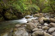 Awesome Prints - Waihee River Print by Jenna Szerlag
