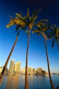 Architecture - Waikiki Skyline by Carl Shaneff - Printscapes