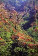 Waimea Valley Prints - Waimea Canyon Aerial Print by Carl Shaneff - Printscapes