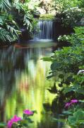 Waimea Valley Prints - Waimea Falls Park Print by Bill Brennan - Printscapes