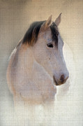 Gray Horse Digital Art Framed Prints - Waiting For Her Framed Print by Betty LaRue