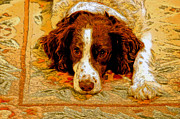 Dog Greeting Cards Framed Prints - Waiting For Jared Framed Print by James Steele