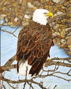 Eagle Paintings - Waiting for lunch by Dean Manemann
