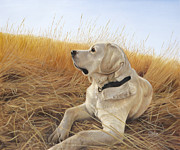 Golden Lab Prints - Waiting For The Birds Print by Tammy  Taylor