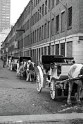 Horse And Cart Metal Prints - Waiting for Work Metal Print by Kristine Patti