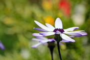 Senetti Metal Prints - Waiting Metal Print by Heidi Smith