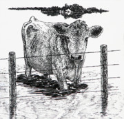 Cow Drawings Framed Prints - Waiting Framed Print by Lonnie Tapia