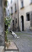 Dog Photo Originals - Waiting by Marilyn Hunt