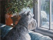 Schnauzer Framed Prints - Waiting Patiently Framed Print by Anda Kett