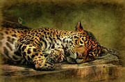 Big Cat Digital Art Acrylic Prints - Wake Up Sleepyhead Acrylic Print by Lois Bryan