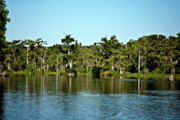 Creature Digital Art Originals - Wakulla River The Real Florida by Frank Feliciano