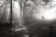 Fog Mist Prints - Walk in the light Print by Floriana Barbu