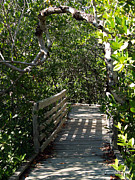 Florida Bridge Photo Originals - Walk in the Park by Karen Devonne Douglas
