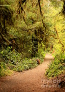 Olympic National Park Prints - Walk Into the Forest Print by Carol Groenen