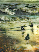 Sea Birds Mixed Media Posters - Walking at beach Poster by Anne Weirich