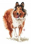 Akc Painting Framed Prints - Walking Collie Framed Print by Debra Jones