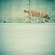 Homeless Pets Prints - Walking dog Print by Lars Hallstrom