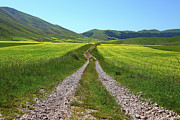 Dirt Road Prints - Walking In Castelluccio Print by Danilo Antonini www.flickr.com/photos/danilo_antonini