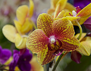 Exotic Orchid Art - Walking On Sunshine by Angelina Vick