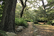 Dappled Light Framed Prints - Walking Path at Descanso Gardens Framed Print by Jan Cipolla