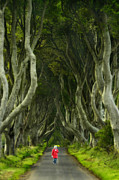 Dark Hedges Prints - Walking the Dark Hedges Print by Jack Daulton