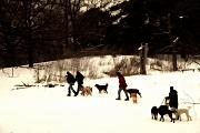 Dog Walking Photo Prints - Walking the Dogs Print by Cabral Stock