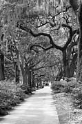 Park Benches Photo Metal Prints - Walking Through the Park in Black and White Metal Print by Suzanne Gaff
