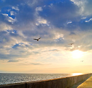 Flying Seagulls Framed Prints - Walkway Along Oceanfront Framed Print by David Buffington