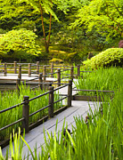 Angular Metal Prints - Walkway in Japanese Garden Metal Print by David Buffington