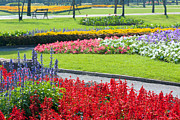 Flowers Photo Originals - Walkway In Park by Atiketta Sangasaeng