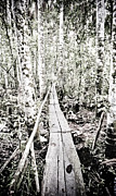 35mm Prints - Walkway into the Amazon Print by Darcy Michaelchuk