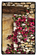 Wall Art Prints Pyrography - Wall Beauty by Mauro Celotti