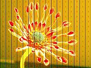 Wall Paper Prints - Wall Flower Print by Tim Allen