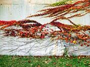 Wall Of Fall Print by Todd Sherlock
