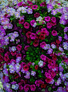 Purple Flowers Digital Art Prints - Wall of Florets Print by Bill Tiepelman