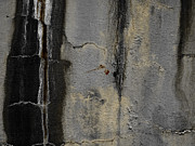 Wall Photos - Wall Texture Number 5 by Carol Leigh
